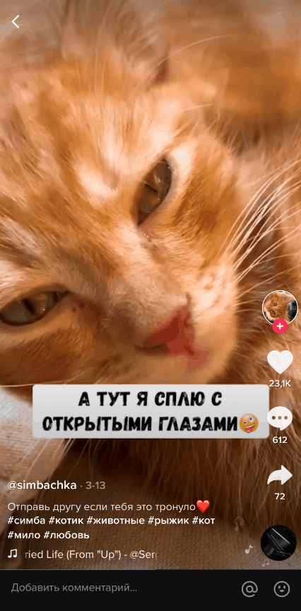 Видео про животных в Тик-Ток